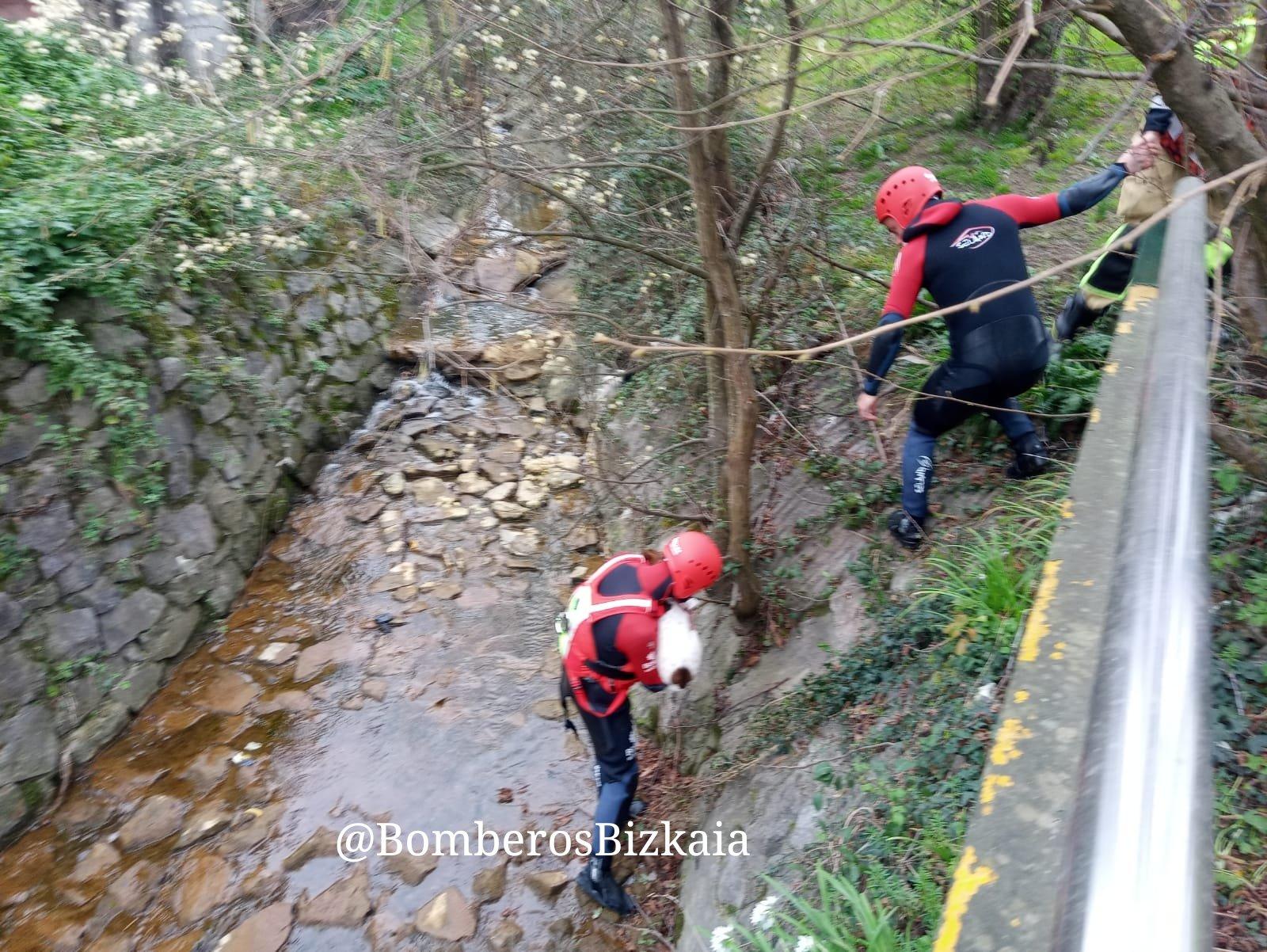 [dotb.eus] Los bomberos rescatan un perro caído en un río en Matiena